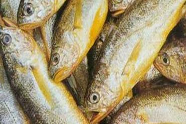 新鲜黄花鱼