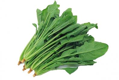 大连蔬菜配送菠菜